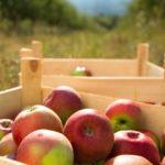 Ökologische Landwirtschaft, Streuobstwiesen, Nachhaltigkeit, Demeter, Bioland