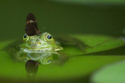 Naturschutz, Biodiversität, Reptilien, Schmetterlinge, Zauneidechse, Fledermaus, Fischotter, FFH, Fauna, Flora, Habitat, Umwelt, Kröten, NABU, BUND