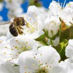 Landwirtschaft, Imker, Bienen, Honig, Leberkraut, Lungenkraut, Bienenhotel, Acker,