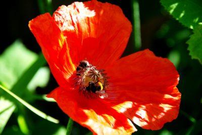 Biodiversität, Umweltschutz, Insekten, Globale Erwärmung, Wasser, Naturschutz, Ökologie